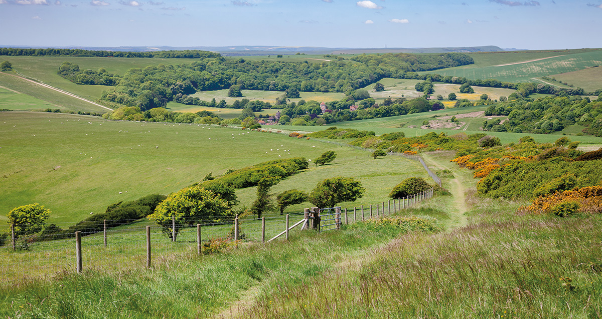 Exploring the beautiful South Downs